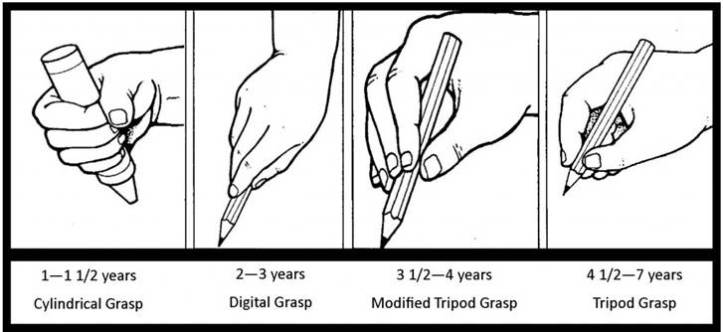 Grasp Developement.jpg